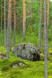 Grote rots in bos Stock Afbeeldingen
