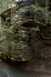 Grote rots en boom op de kloofmuur stock afbeelding