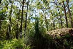 Grote rots in tropisch Australisch bos Stock Foto's