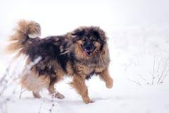 Grote schapenhond in de sneeuw royalty-vrije stock afbeelding