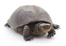 Grote schildpad Royalty-vrije Stock Fotografie