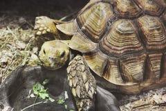 Grote schildpad in aquarium stock foto's