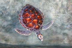 Grote schildpad in de pool royalty-vrije stock afbeelding