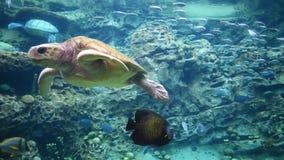 Grote schildpad onderwater in Seaworld 1