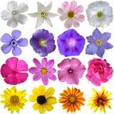 Grote Selectie van Diverse Bloemen Royalty-vrije Stock Afbeeldingen