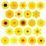 Grote Selectie van Diverse Caleidoscopische Mandala Flowers Isolated op Wit royalty-vrije stock foto's