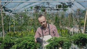 Grote serre met decoratieve installaties en bloemen De tuinman met een baard in een rood overhemd, inspecteert de voorwaarde van stock footage