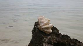 Grote shell op een rots stock footage