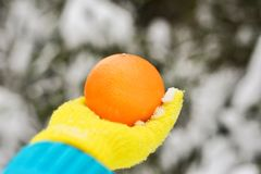 Grote sinaasappel ter beschikking in gele handschoen op bosachtergrond stock fotografie