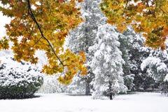Grote sneeuw in de herfst Stock Foto