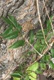 Grote Spangled Vlinder Fritillary royalty-vrije stock afbeeldingen