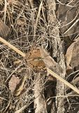 Grote Spangled Vlinder Fritillary stock foto
