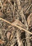Grote Spangled Vlinder Fritillary royalty-vrije stock foto's