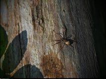 Grote spin met een verlofschaduw Royalty-vrije Stock Foto's