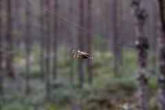 Grote spin op het Web royalty-vrije stock afbeeldingen