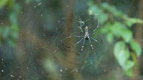 Grote spin op Web stock videobeelden