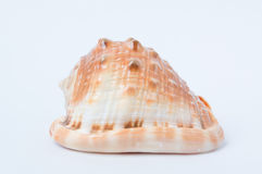 Grote spiraalvormige overzeese shell close-up Royalty-vrije Stock Foto's
