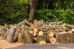 Grote stapel van houten logboeken Stock Fotografie