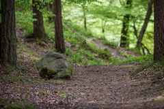 Grote steen in het hout Stock Foto