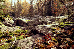 Grote stenen in het bos stock fotografie