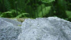 Grote stenen op een achtergrond van varen stock videobeelden