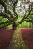 Grote tak die naar Angel Oak Tree in Zuid-Carolina leiden stock afbeelding
