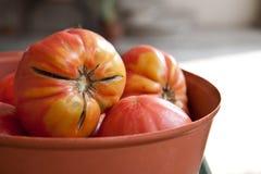 Grote tomaten Stock Foto's