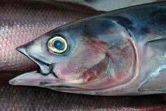 Grote tonijnvissen zoals getrokken, grafisch: grijs terug bij de vissen, de roze vinnen, de open mond en een groot geel oog met b Royalty-vrije Stock Afbeeldingen