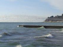Grote troep van zeemeeuwen over het overzees Royalty-vrije Stock Afbeeldingen