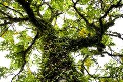 Grote tropische boom Stock Foto's