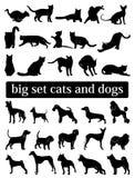 Grote vastgestelde katten en honden Silhouetten Stock Foto's