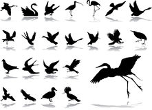 Grote vastgestelde pictogrammen - 2. Vogels Stock Foto
