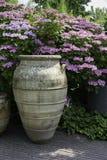 Grote vazen met de achtergrond van hydrangea hortensiahortensia Royalty-vrije Stock Foto's