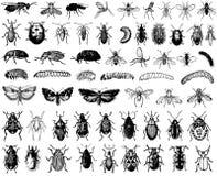 Grote vectorinzameling van insecten Stock Foto