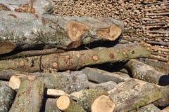 Grote vers cuted bomen klaar voor knipsel Royalty-vrije Stock Fotografie