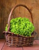 Grote verse organische groene sla Royalty-vrije Stock Foto's