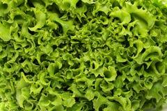 Grote verse organische groene sla Royalty-vrije Stock Foto