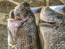 Grote verse vissen bij het eiland van Granada ` s Stock Foto's