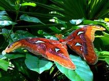 Grote vlinder royalty-vrije stock foto's