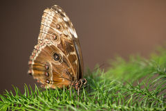 Grote vlinder op een boom Stock Fotografie