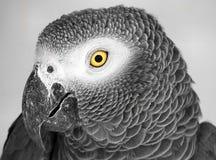 Grote vogel Royalty-vrije Stock Foto's