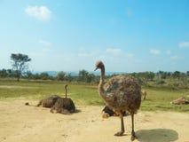 Grote vogel en vrienden royalty-vrije stock fotografie