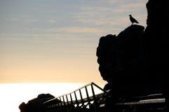 Grote vogel op een klip in het pari van de Lijstberg in Zuid-Afrika royalty-vrije stock foto's