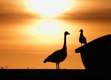 Grote Vogel Weinig Vogel Royalty-vrije Stock Afbeeldingen