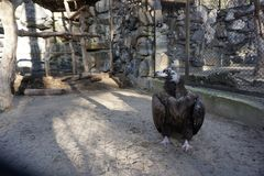 Grote vogelgier in een kooi royalty-vrije stock afbeeldingen