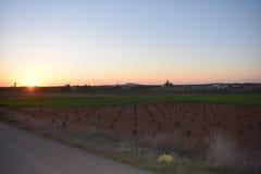 Grote wijngaarden stock foto's