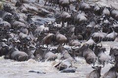 Grote Wildebeest-Migratie royalty-vrije stock foto