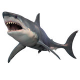 Grote Witte Geïsoleerde Haai vector illustratie
