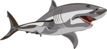 Grote witte haai Royalty-vrije Stock Foto