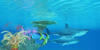 Grote Witte Haaiertsader stock illustratie